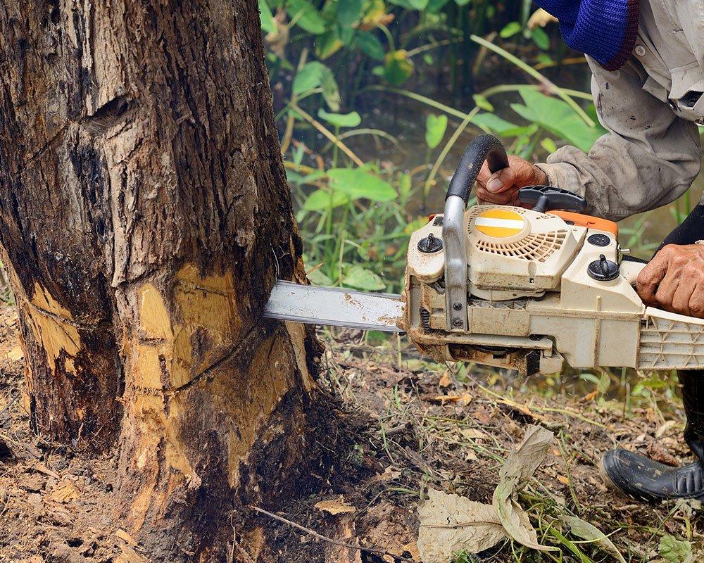 Tree Service Atlanta - Tree Removal