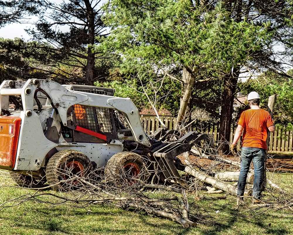 Tree Service Atlanta - Arborist