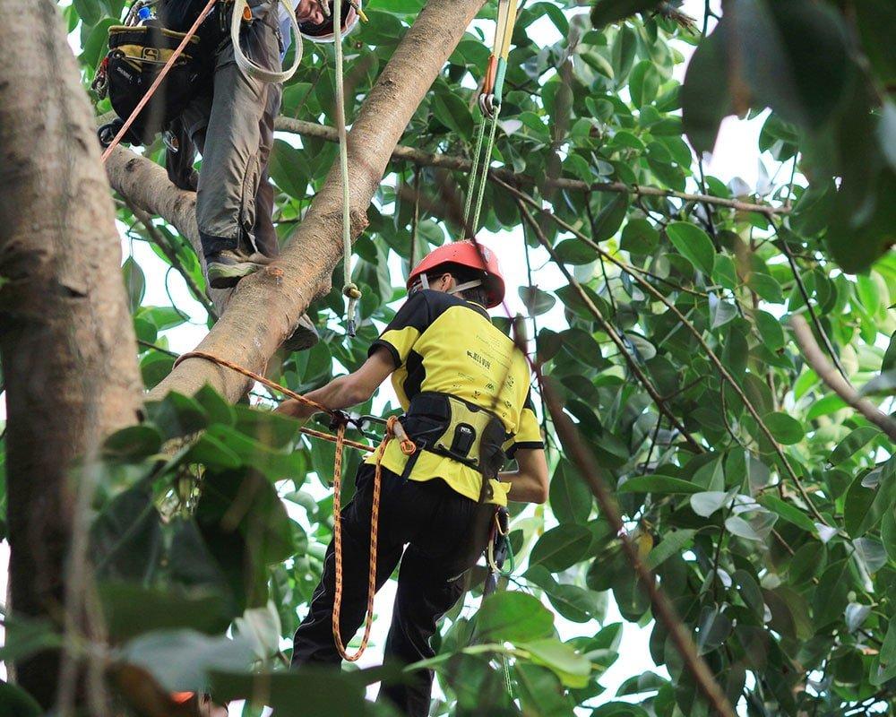 Tree Service Atlanta - Emergency Tree Removal