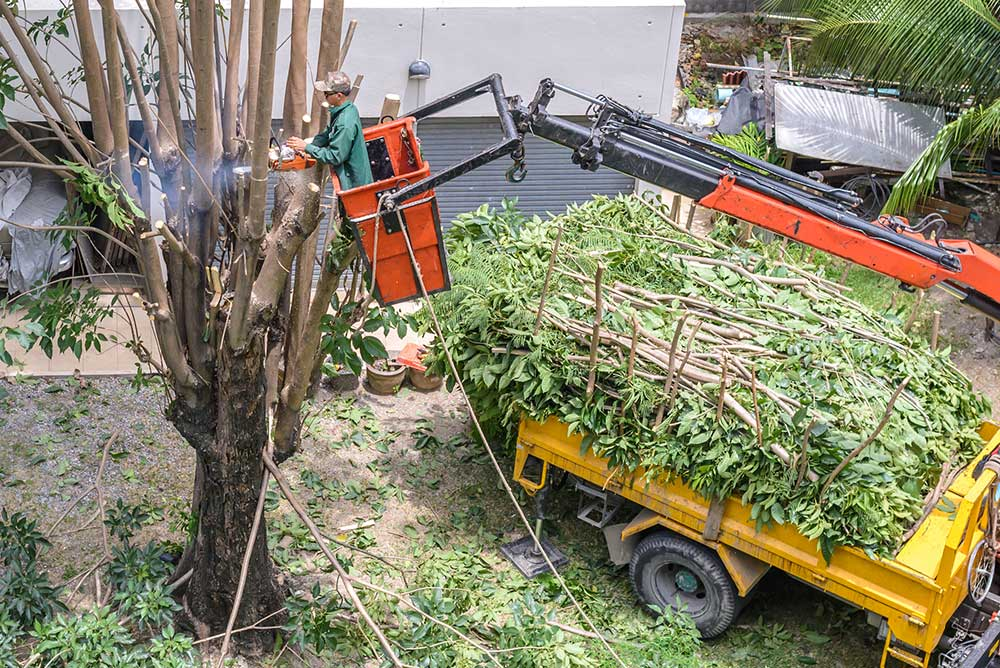 Tree Service Atlanta - Tree Pruning