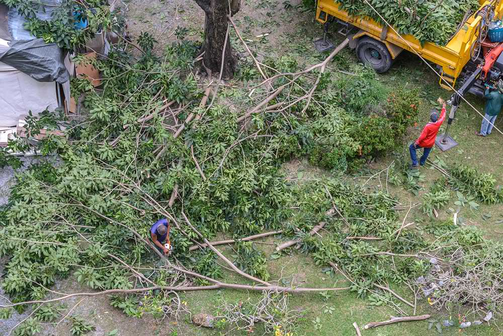 Tree Service Atlanta - Tree Trimming